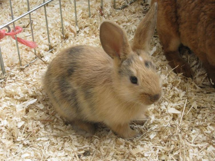 One of the baby bunnies