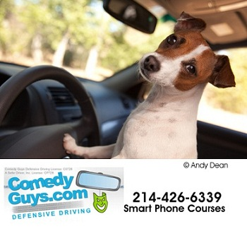 Comedy Format Defensive Driving Classes