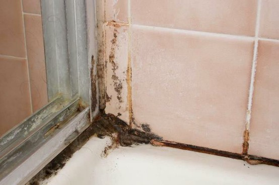 Mold growing on bathroom tiles and grout