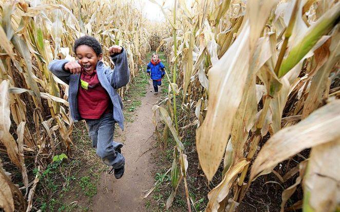 Romping through Devine's Corn Maze & Pumpkin Patch/Photo: Clay Jackson, HMCTC
