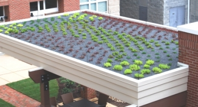 Green Roof at The Lofts at Charleston Row