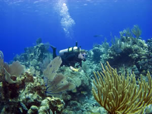 Scuba diving in the BVI
