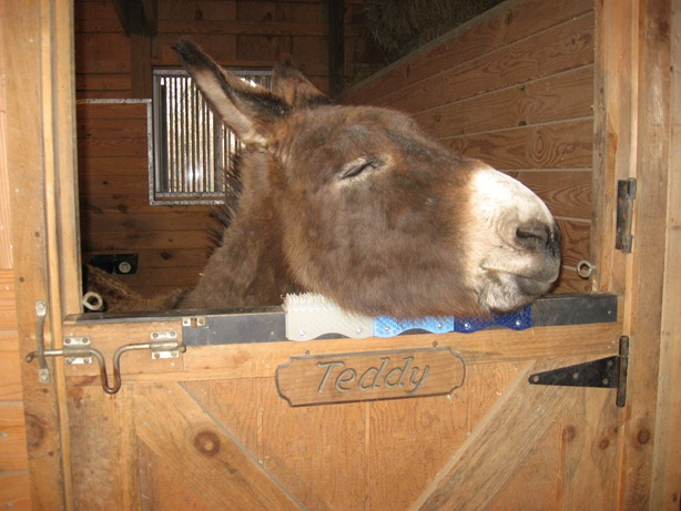 Donkeys are among the many animals enjoying ScratchnAll, a Made in USA product.