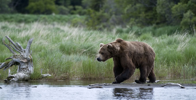 Walk on the Wild Side with an Alaska Yacht Charter