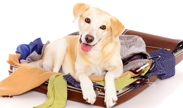 Pets Sleep For Free With The San Diego Marriott Del Mar's Doggone Great Getaway