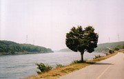 Cape Cod Canal and Tree