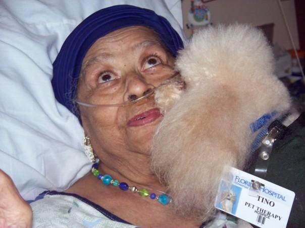 HosPooch volunteer Tino greets a Florida Hospital HospiceCare patient.