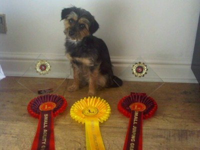 Kiri with previously won rosettes
