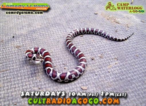 Monty Python Tribute Saturday 1 pm online at cultradioagogogo.com