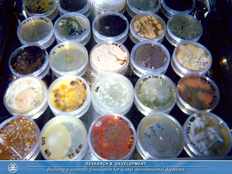 Mold colonies growing in mold test kits