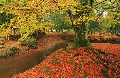Autumn is a great time of year to visit the New Forest