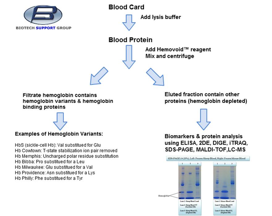 biotechsupportgrouphemovoidbloodcardhemoglobinvari