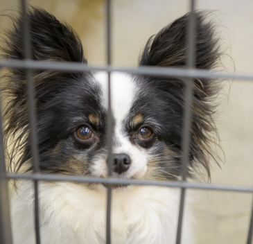 Puppy Mill Survivor, on the road to freedom