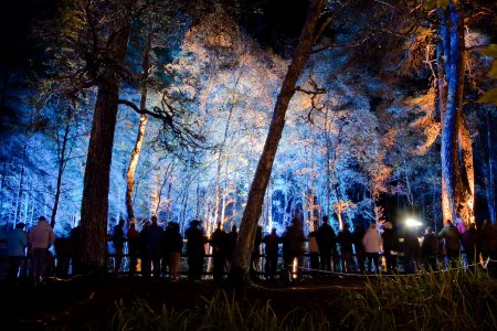 The Enchanted Forest, Faskally Wood 2012