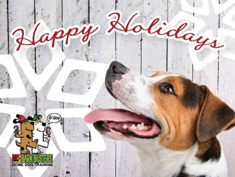 Keep your dog safe this Holiday