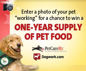 Photo Contest - Dogs at Work