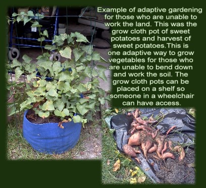 healing gardens image.