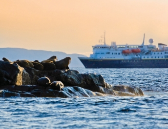 Walrus off Baffin Island