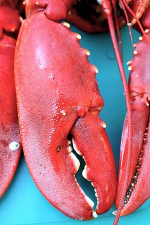 lobster (credit-Sofie Laier Henriksen-stock.x.chan