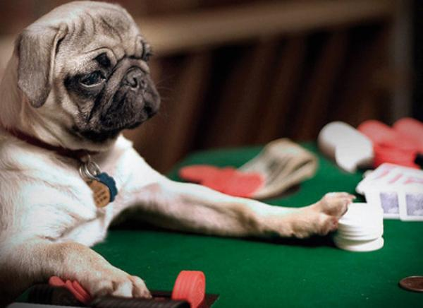 Don't Gamble With Your Pet's Health!!