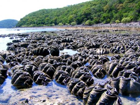clams on orpheus