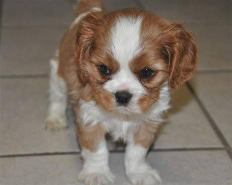 Petland Novi Mi Puppy For A Lifetime On All Puppies