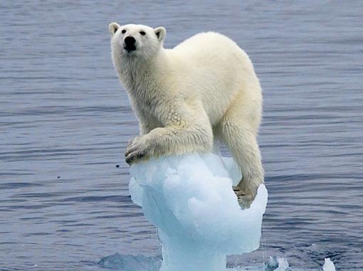 Save The Polar And Get Solar Help Stop The Greenhouse