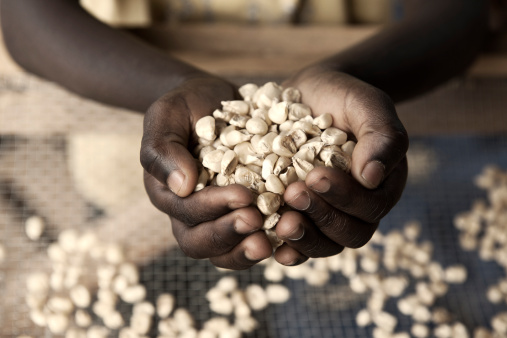 African maize lost to insect pests post harvest could feed 48m people