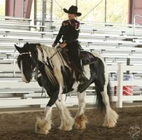 Gypsy Vanner Horse Diva From Gypsy Dance Ranch