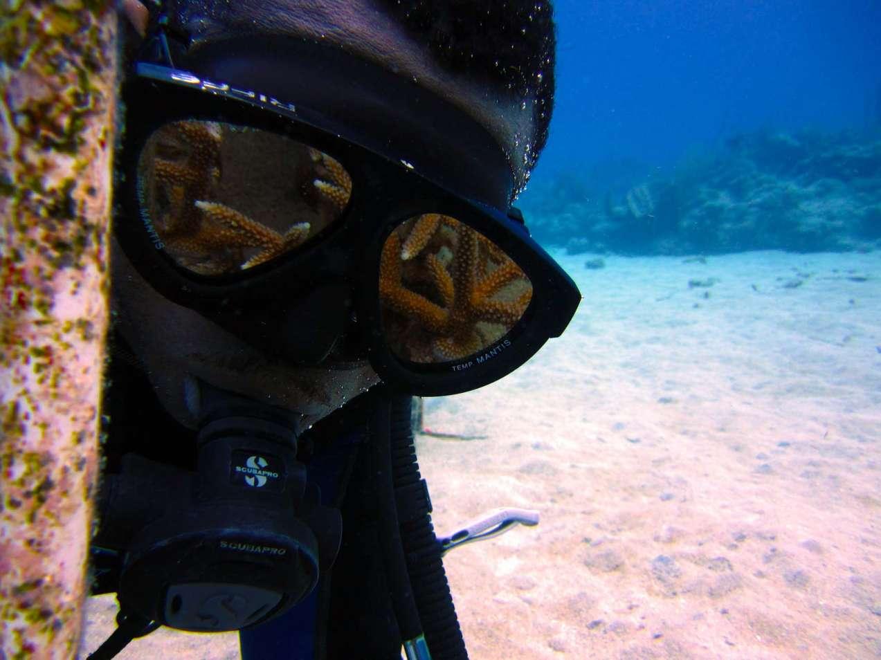 ib-designs-Contributes-to-TNC-Coral-Restoration-Pr