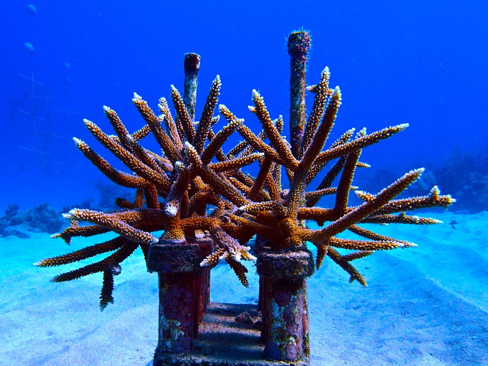 ib-designs-Supports-Coral-Nursery-Program