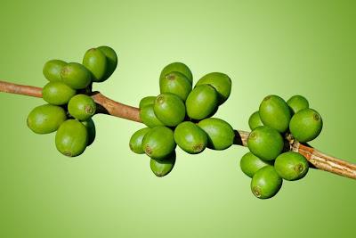 Green_Coffee_Beans_green_benefit