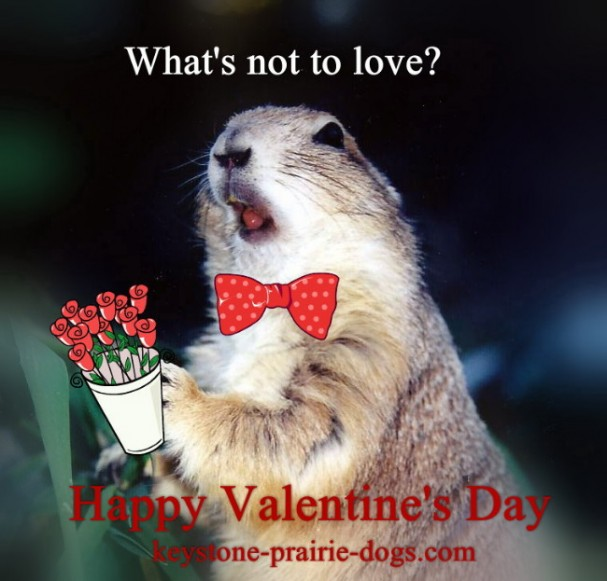 Prairie dogs need love, too!