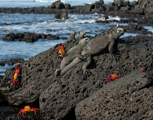 The amazing wildlife of the Galapagos Islands