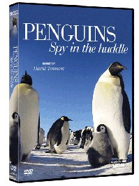 Penguins Spy in the Huddle