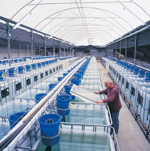 sistem for aquaponic: Design of aquaponics