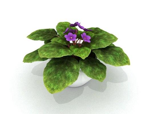 3d_african_violet
