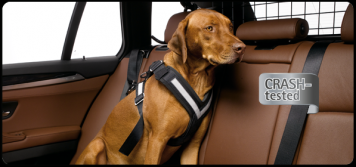 AllSafe Crah Tested Dog Harness