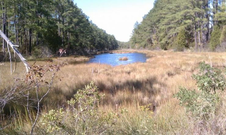 Belle Isle State Park. Photo: Tripleblaze member JimmyDean