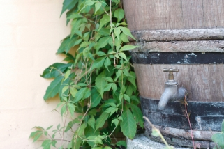 Rustic Rain Barrel Garden Adds Character, Style and Value