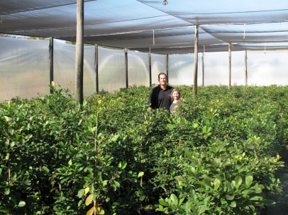 Record Harvest Opens New Doors For Miracle Fruit Miracle Fruit Farm Llc Prlog
