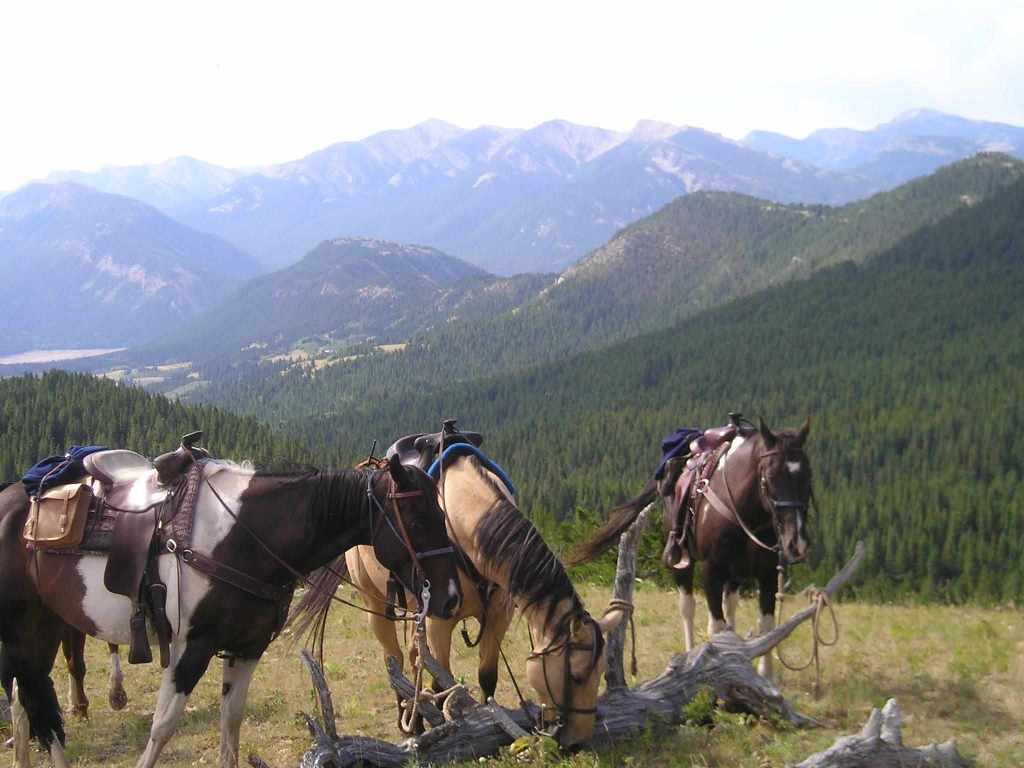 Montana Horse Ranches Best Place For Keeping Horses