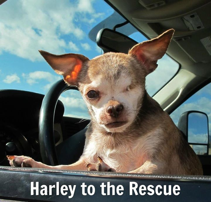 Harley to the Rescue