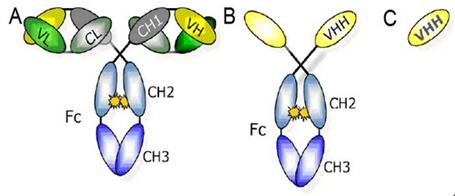 Creative Biomart-Introduction to Nanobody