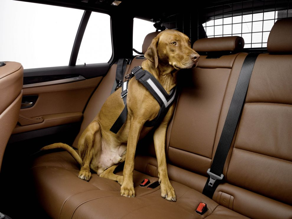 AllSafe Harness - Crash Tested Pet Safety Harness