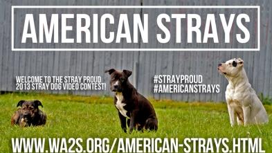 #StrayProud 2013 Video Contest