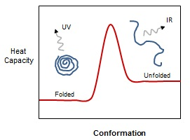 DSC calorimetry - Protein going from folded to unfolded conformation