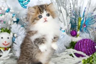 Rug Hugger Kittens For