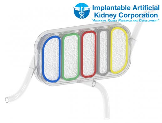 Kidney-Image-10-19-13-2