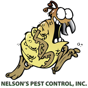 Best Pest Control Tampa